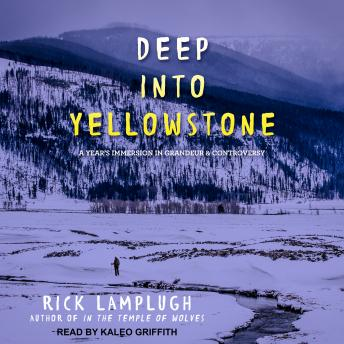 Download Deep into Yellowstone: A Year's Immersion in Grandeur and Controversy by Rick Lamplugh