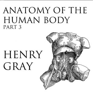 Anatomy of the Human Body, Part 3 by  Henry Grayson