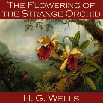 Flowering of  Strange Orchid
