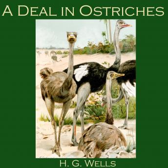 Deal in Ostriches