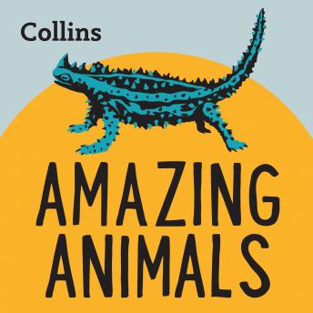 Amazing Animals: For ages 7-11