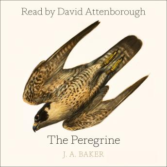 Download Peregrine by J. A. Baker