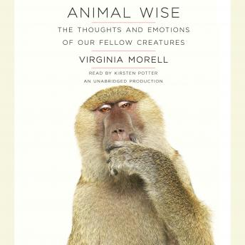 Download Animal Wise: The Thoughts and Emotions of Our Fellow Creatures by Virginia Morell