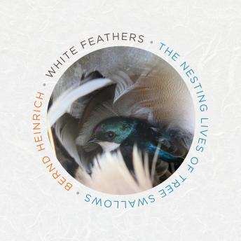 Download White Feathers: The Nesting Lives of Tree Swallows by Bernd Heinrich