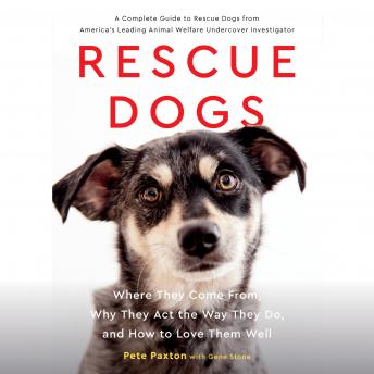 Download Rescue Dogs: Where They Come From, Why They Act the Way They Do, and How to Love Them Well by Gene Stone, Pete Paxton