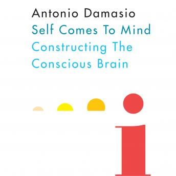 Download Self Comes to Mind by Antonio Damasio