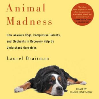 Download Animal Madness: How Anxious Dogs, Compulsive Parrots, Gorillas on Drugs, and Elephants in Recovery Help Us Understand Ourselves by Laurel Braitman