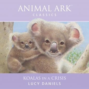 Animal Ark: Koalas in a Crisis