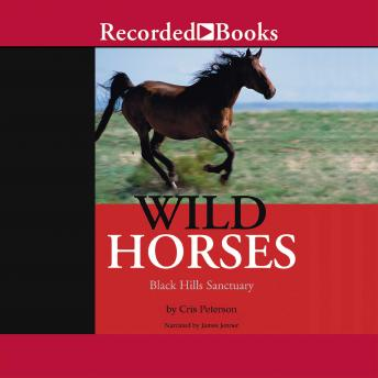 Wild Horses: Black Hills Sanctuary, Cris Peterson