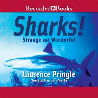 Sharks! Strange and Wonderful