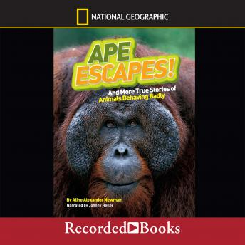National Geographic Kids Chapters: Ape Escapes And More True Stories of Animals Behaving Badly, Aline Alexander Newman
