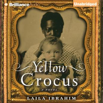 Download Yellow Crocus by Laila Ibrahim