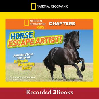 National Geographic Kids Chapters: Horse Escape Artist: And More True Stories of Animals Behaving Badly, Ashlee Brown Blewett