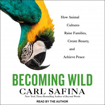 Becoming Wild: How Animal Cultures Raise Families, Create Beauty, and Achieve Peace details