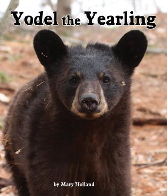 Yodel the Yearling