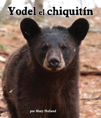 Yodel, el chiquitín