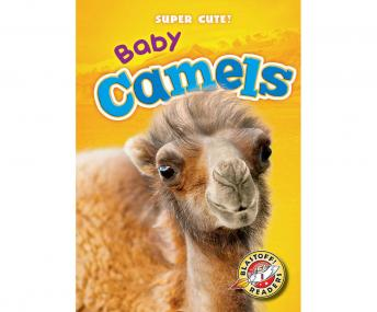 Baby Camels: Blastoff! Readers: Level 1