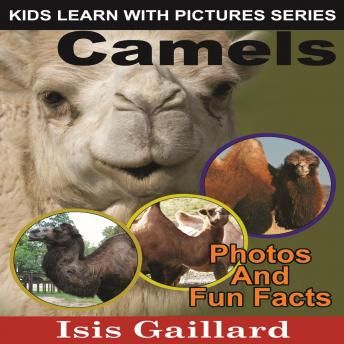 Camels: Photos and Fun Facts for Kids
