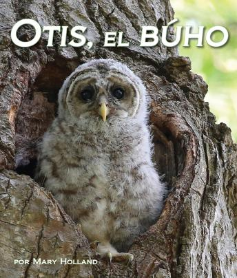 Otis, el búho
