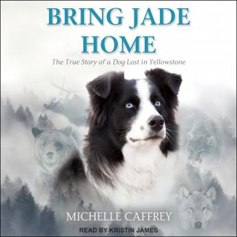 Download Bring Jade Home: The True Story of a Dog Lost in Yellowstone and the People Who Searched for Her by Michelle Caffrey