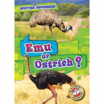 Emu or Ostrich?