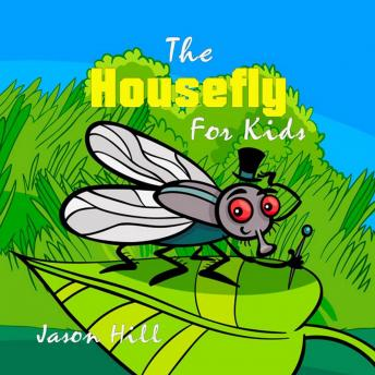 The Housefly for Kids