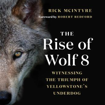 Download Rise of Wolf 8 by Rick Mcintyre, Robert Redford