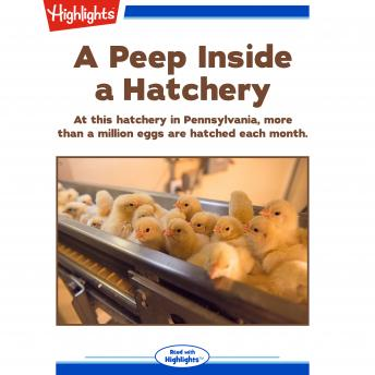 A Peep Inside a Hatchery