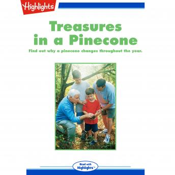 Treasures in a Pinecone