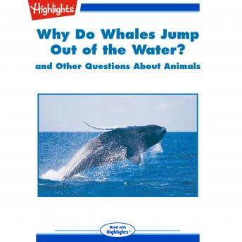 Why Do Whales Jump out of the Water?: and Other Questions About Animals