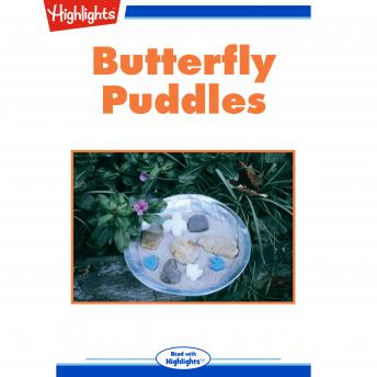 Butterfly Puddles