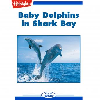 Baby Dolphins in Shark Bay
