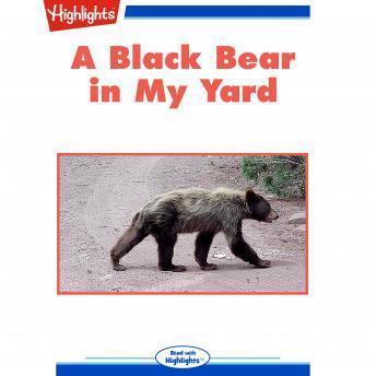 A Black Bear in My Yard