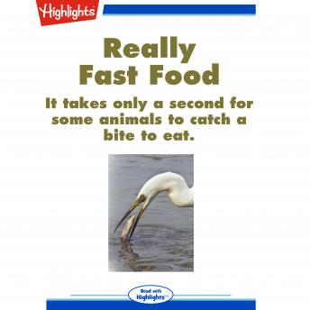 Really Fast Food: It only takes a second for some animals to catch a bite to eat.