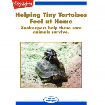 Helping Tiny Tortoises Feel at Home