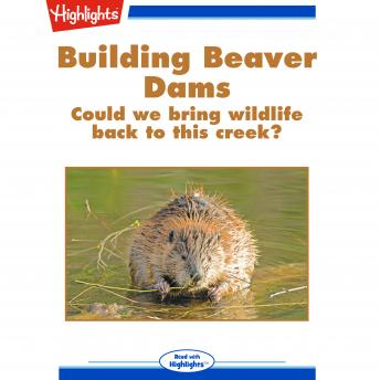 Building Beaver Dams: Could We Bring Wildlife Back to This Creek?
