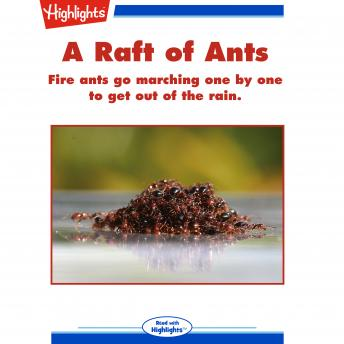 A Raft of Ants