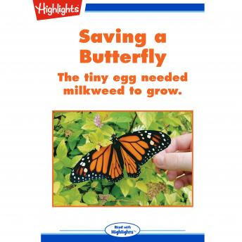 Saving a Butterfly: The tiny egg needed milkweed to grow.