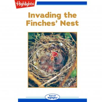 Invading the Finches' Nest