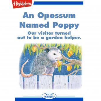 An Opossum Named Poppy