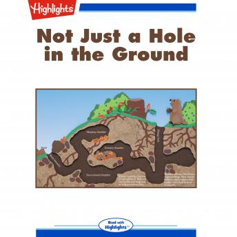 Download Not Just a Hole in the Ground by Elizabeth C. Mccarron
