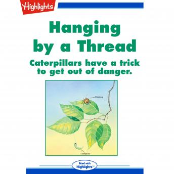 Hanging by a Thread: Caterpillars have a trick to get out of danger.