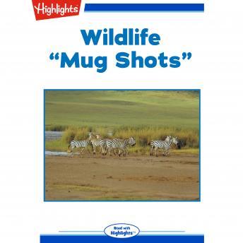 Wildlife: Mug Shots