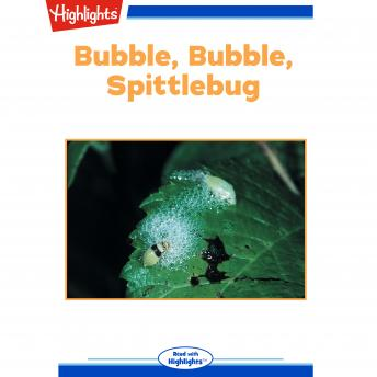 Bubble, Bubble, Spittlebug: Read with Highlights