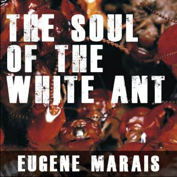 Download Soul of the White Ant by Eugene Marais