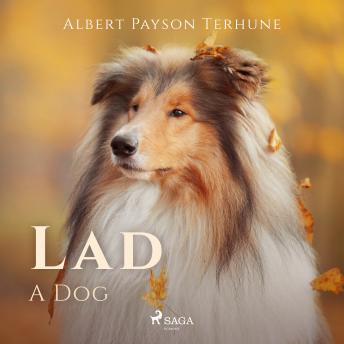 Lad: A Dog details