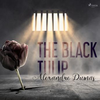 Black Tulip details