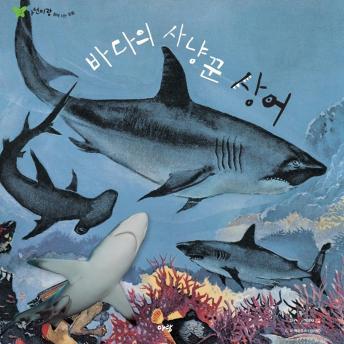바다의 사냥꾼 상어