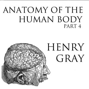 Download Anatomy of the Human Body, Part 4 (Gray's Anatomy) by Henry Gray