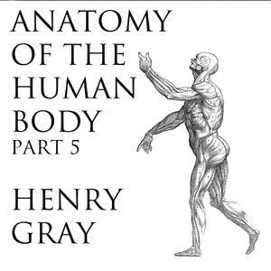 Download Anatomy of the Human Body, Part 5 (Gray's Anatomy) by Henry Gray